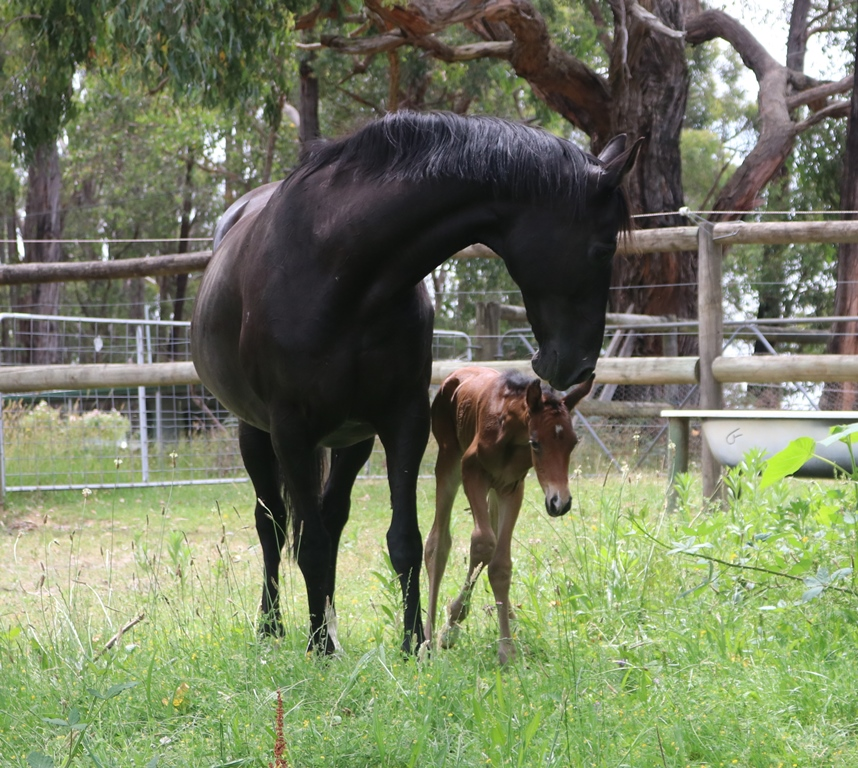 Lucy and Foal 3